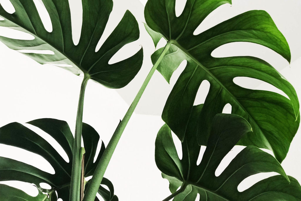piante da interni home staging homethic