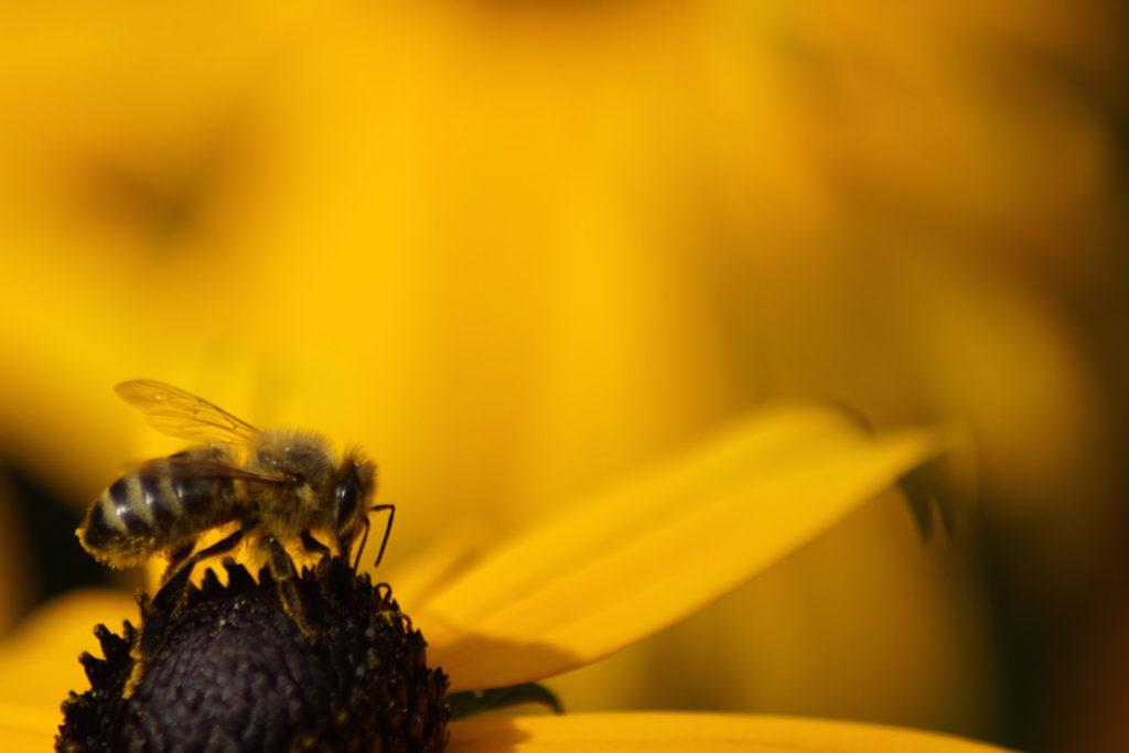 Ti presentiamo Barb Schwarz: l'ape regina dell'Home Staging! Il Blog di Homethic